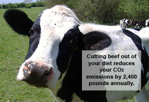 CO2 emissions by cows