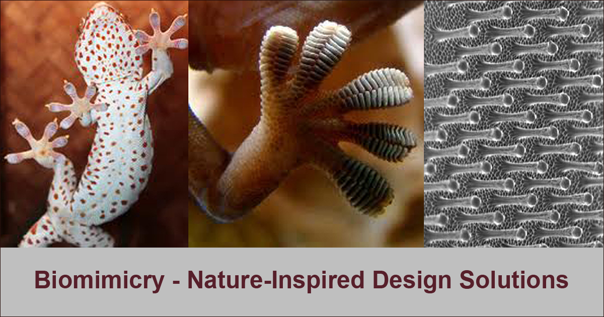 Biomimmicry The Nine Laws Of Nature Photo Gallery