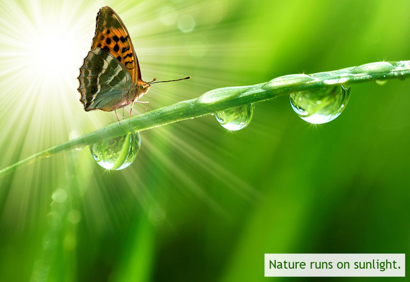 Image of: Nature Wallpapers 1naturerunsonsunlight Indiacelebratingcom Biomimicry Nine Laws Of Nature And Examples Gallery And Ppt