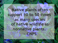 Native Plants Support Local Native Wildlife