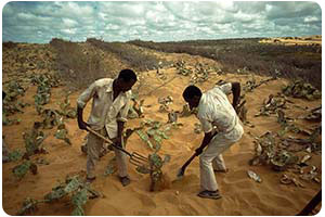 Calendar of Global Environmental Events: World Day to Combat Desertification