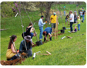 Calendar of Global Environmental Events: Arbor Day