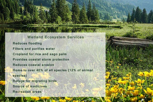 Wetland Ecosystem Sources